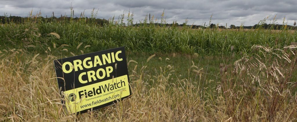 Organic sign field