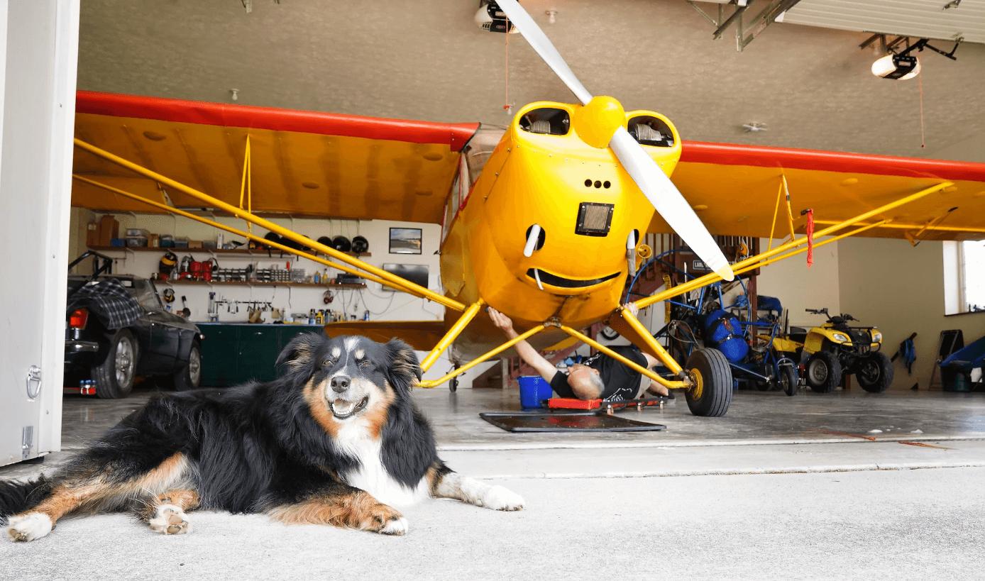 Plane and dog