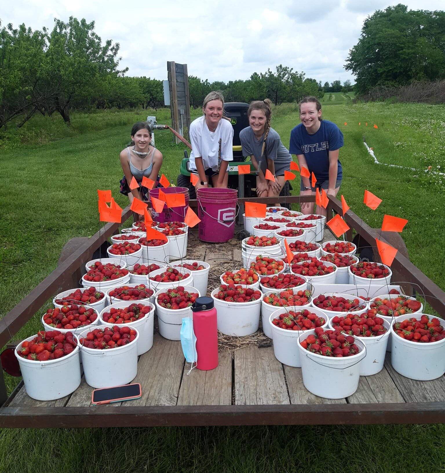 Picking at Orchard