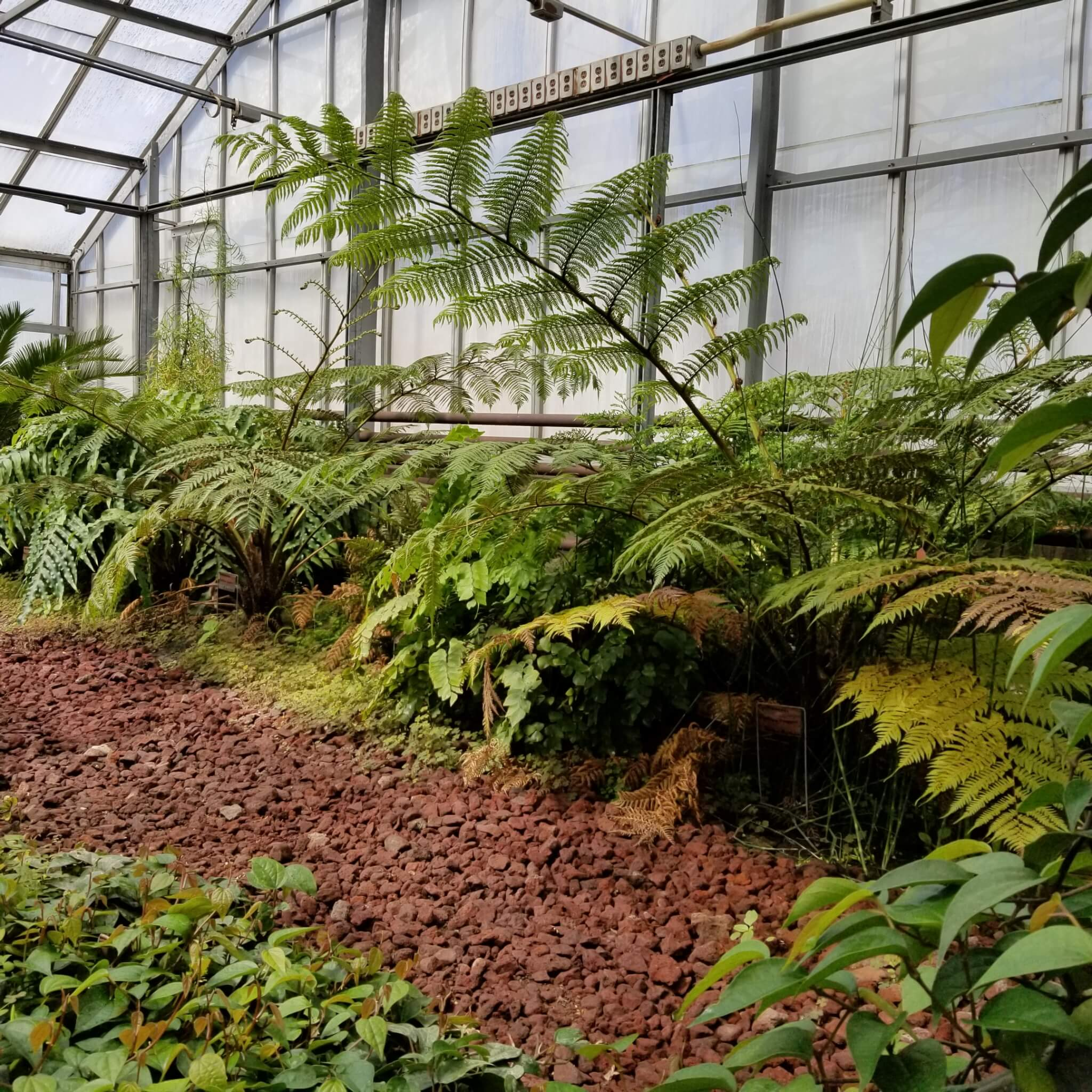 Scott McAdam tends to some of the most unusual and rare plants in Purdue's greenhouses.