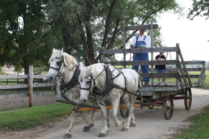 Hay rack with horses