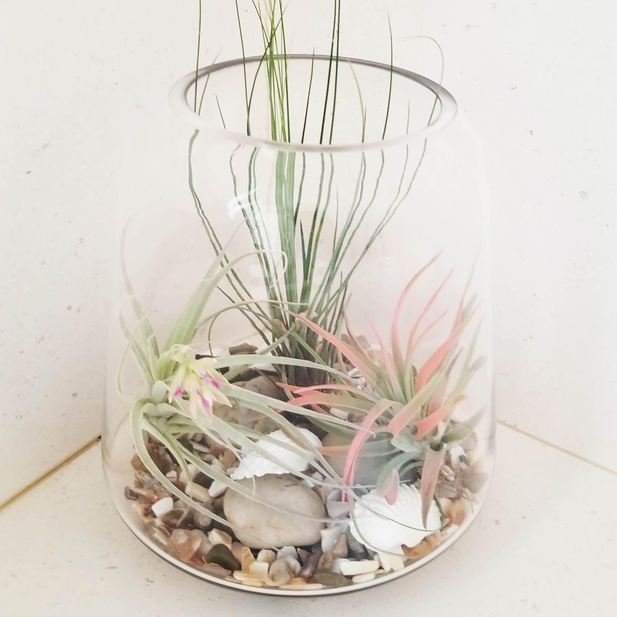 Air plants in a jar