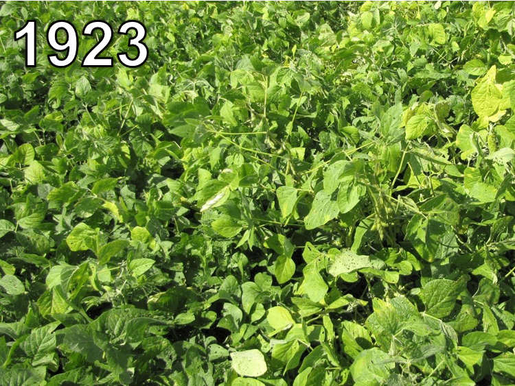 Soybeans from 1923