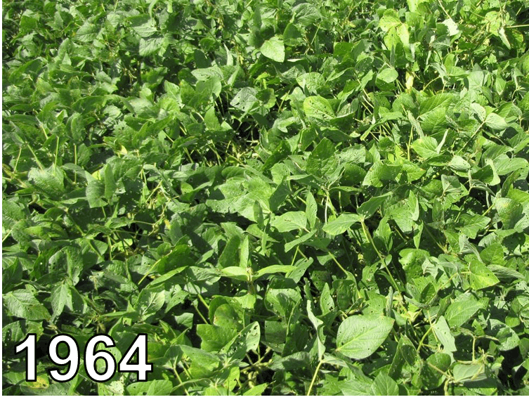 Soybeans from 1964