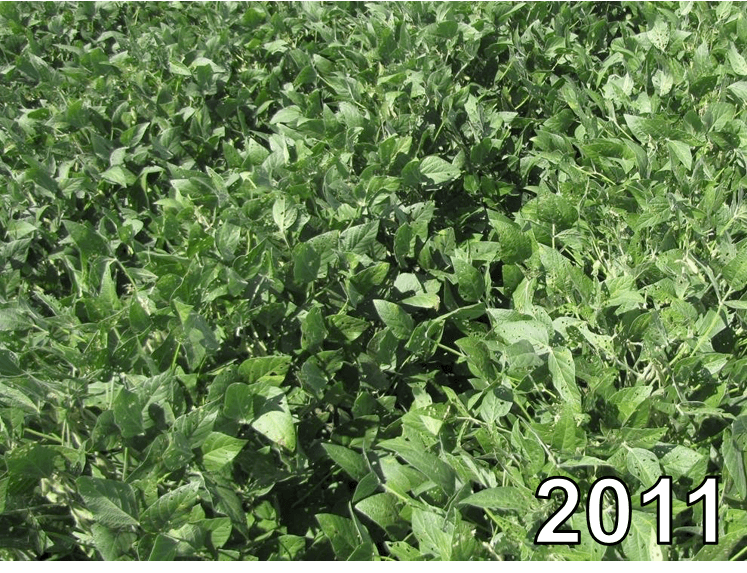 Soybeans from 2011