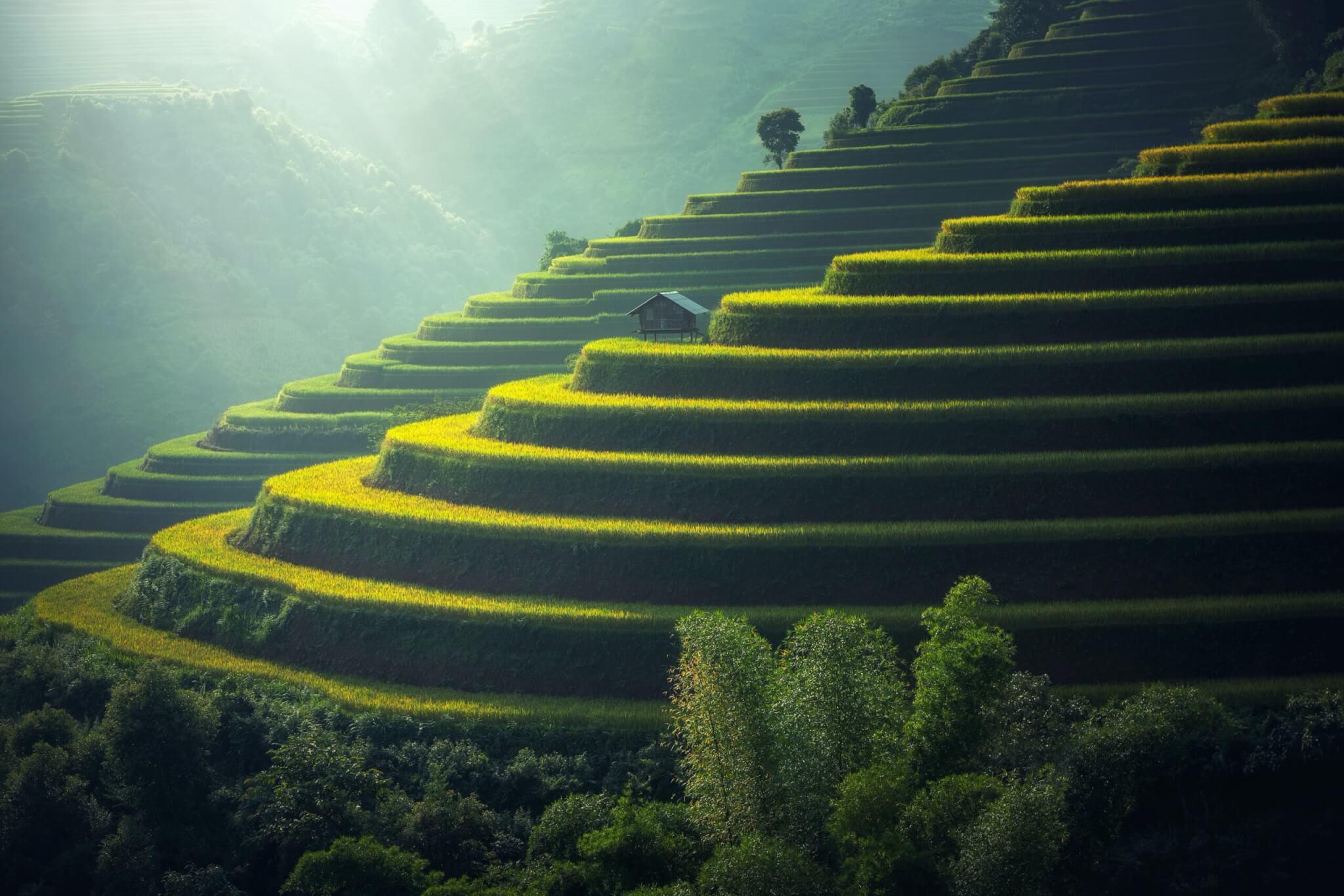 Rice terraces in India.