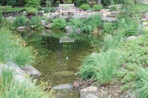 Vegetation and pond