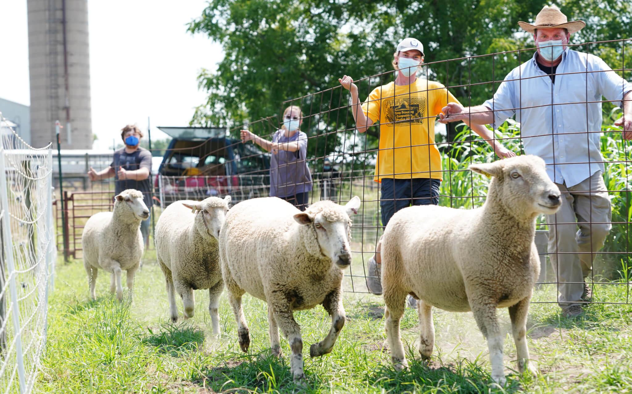Tuinstra and Sheep