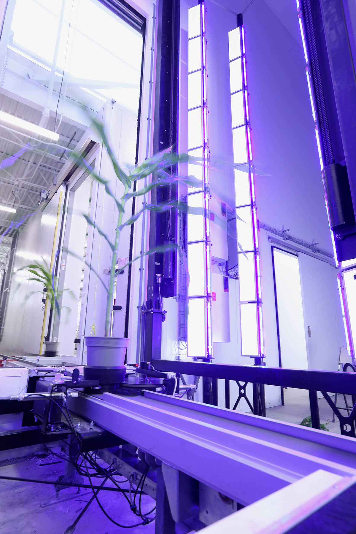 Controlled environment phenotyping
