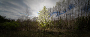 Lone tree in sun