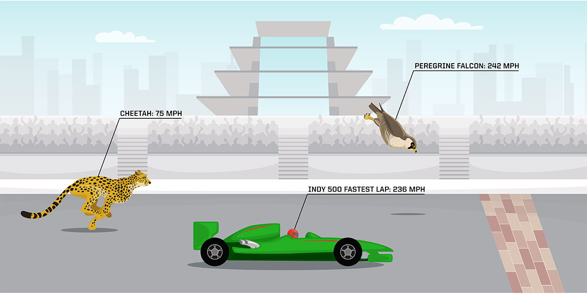 Graphic comparing speed of a cheetah, racecar and falcon