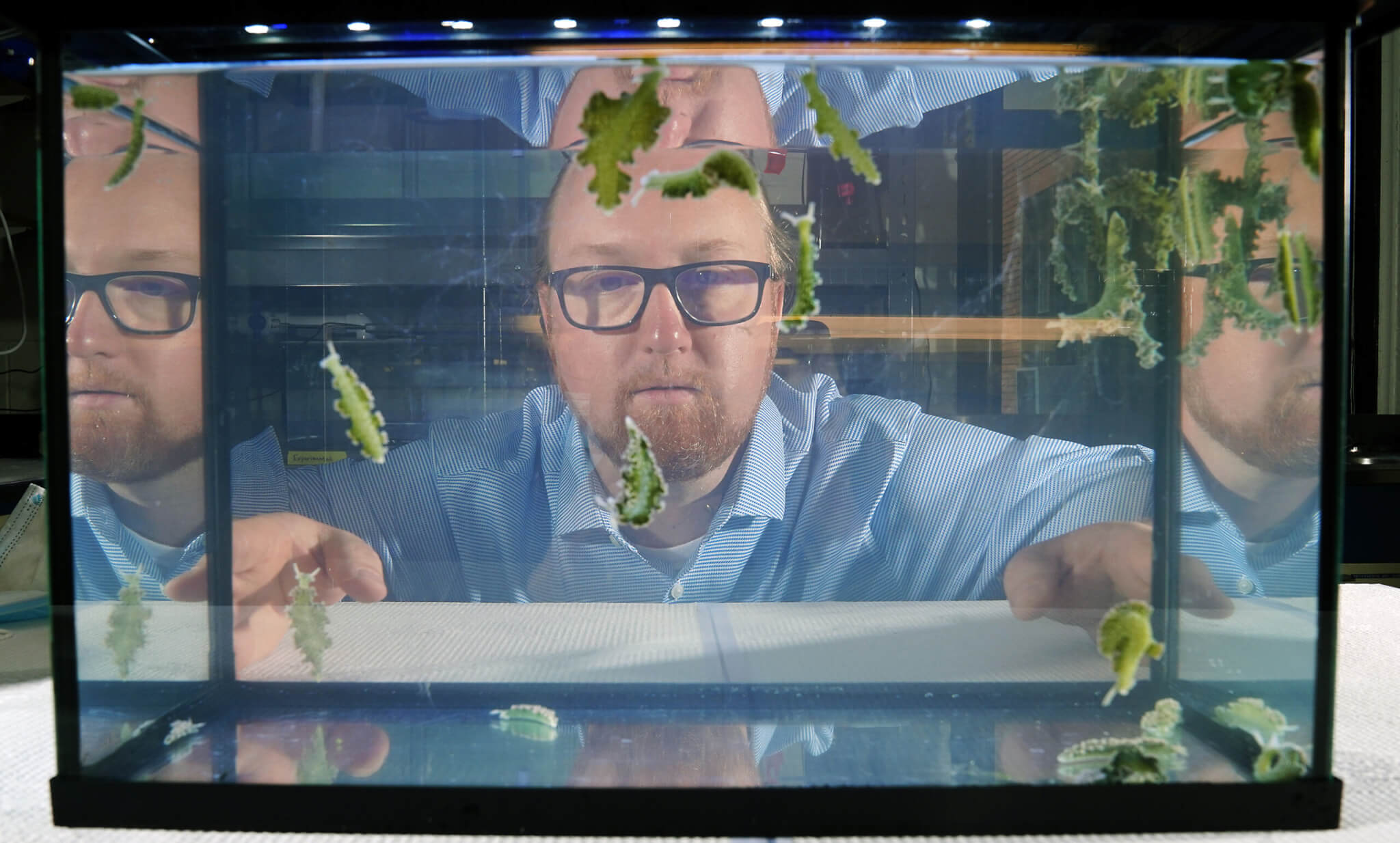 Josh Widhalm studies sea slugs to understand how some of the creatures are able to steal the organelles necessary for photosynthesis from the algae they eat. (Purdue Agricultural Communication photo/Tom Campbell)