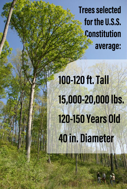 Large tree with facts