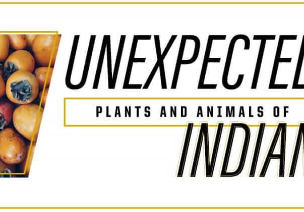1600 Unexpected Plants and Animals of Indiana Drop In Pic