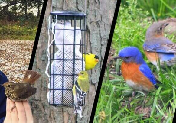 Songbirds in your backyard 1600