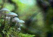 shallow-focus-photography-of-mushrooms-1643422